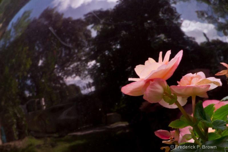 Flower and Reflection