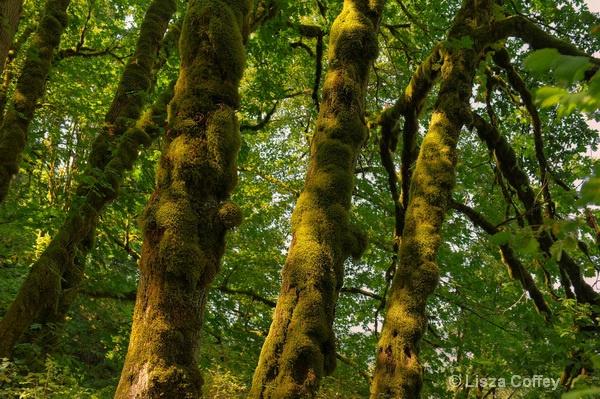 Mossy Growth at Multnomah falls