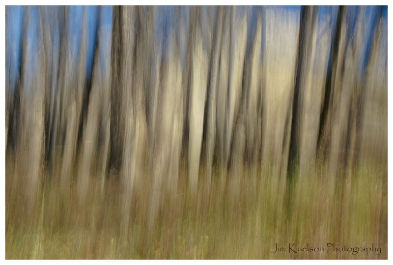 Trees & Camera Movement at Police Point Park