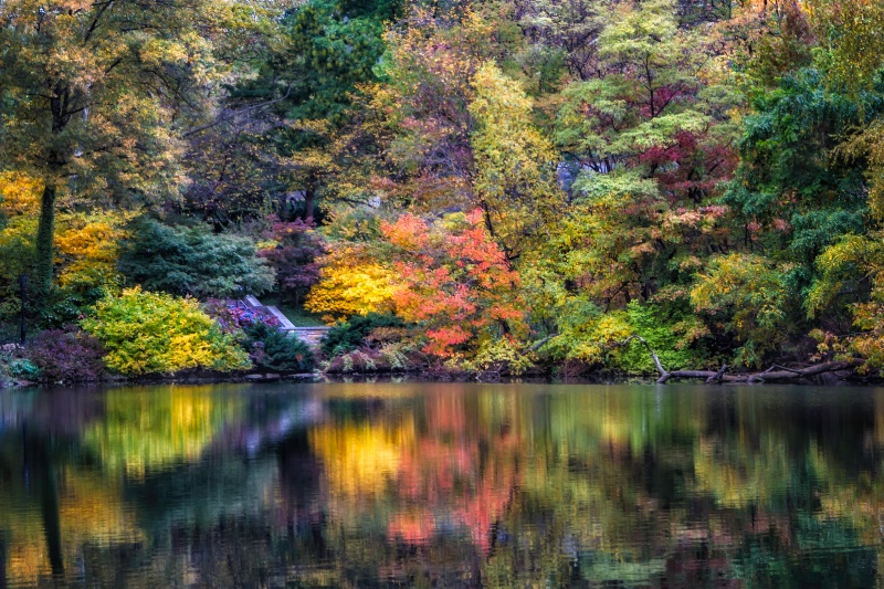 Autumn Colors By The Pond