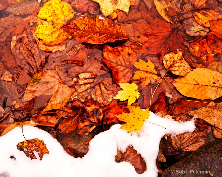 snow and fallen leaves