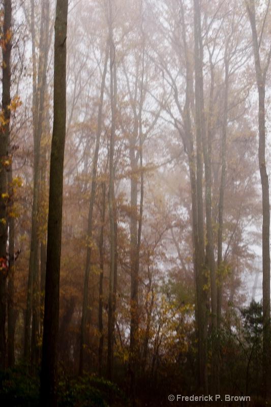 Fall Trees and Fog!