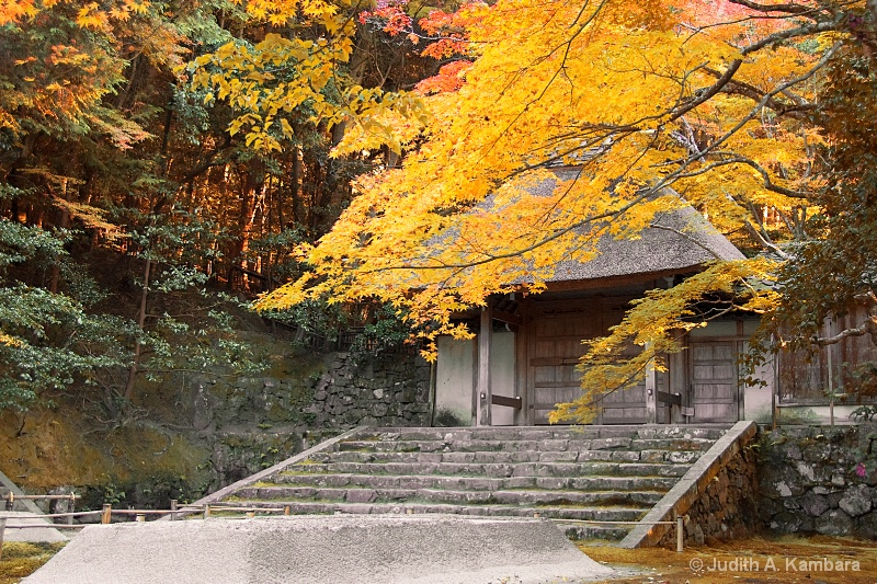autumn colors of honen-in gate