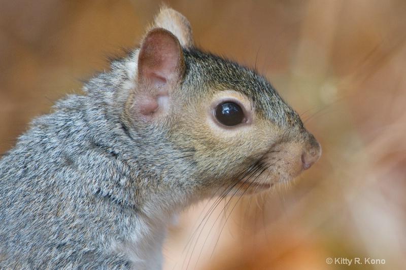 baby squirrel face 1103