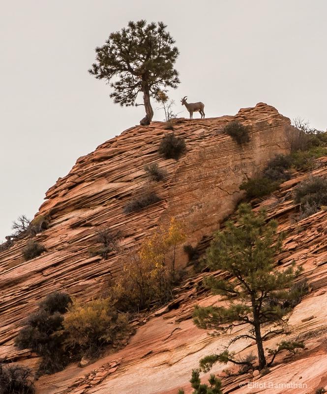Zion Wildlife 9