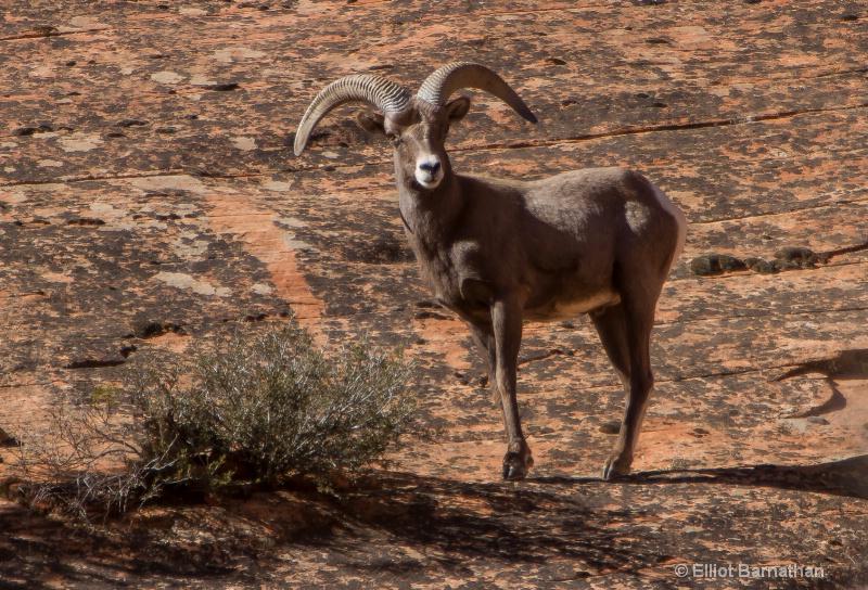 Zion Wildlife 7