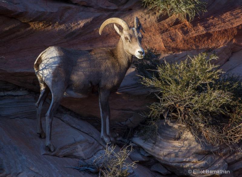 Zion Wildlife 3