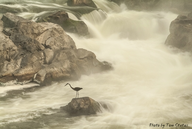 Great Falls, MD by Tom Statas