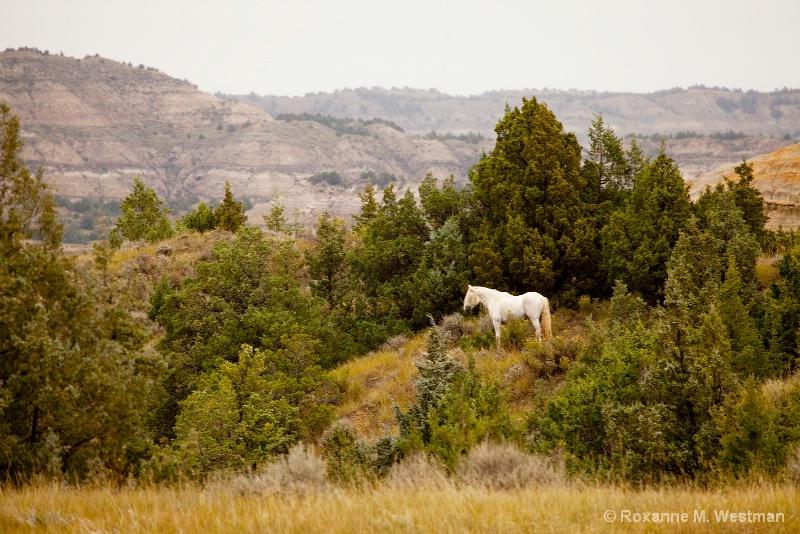 Ghost stallion