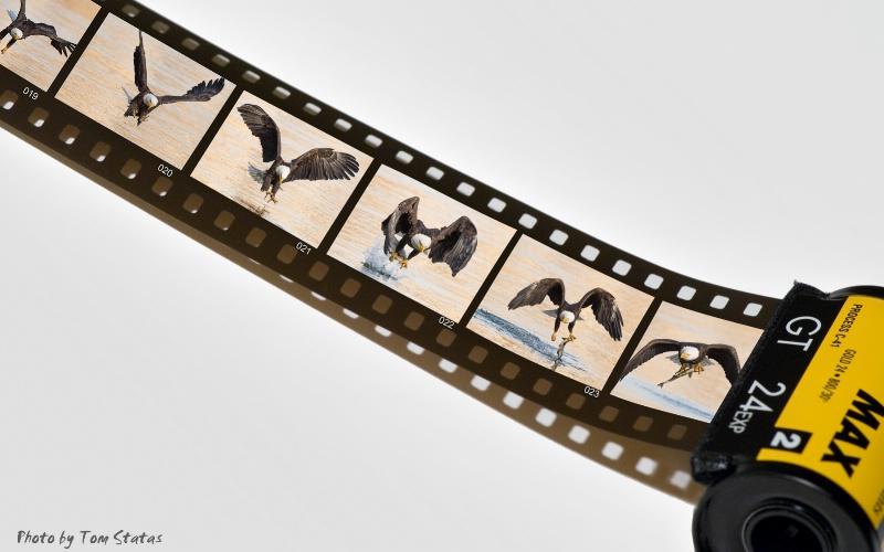 Eagles on Film?