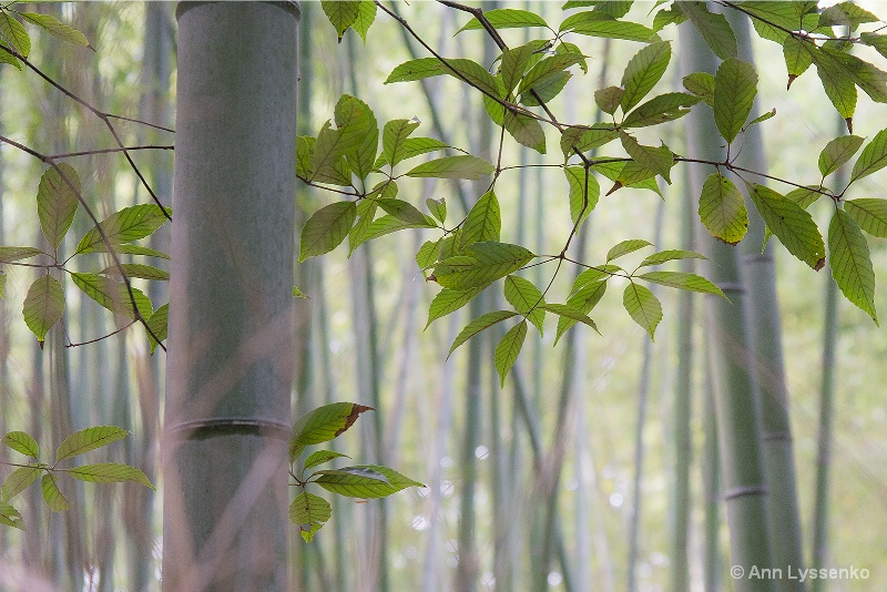 A Slice of the Bamboo Forest