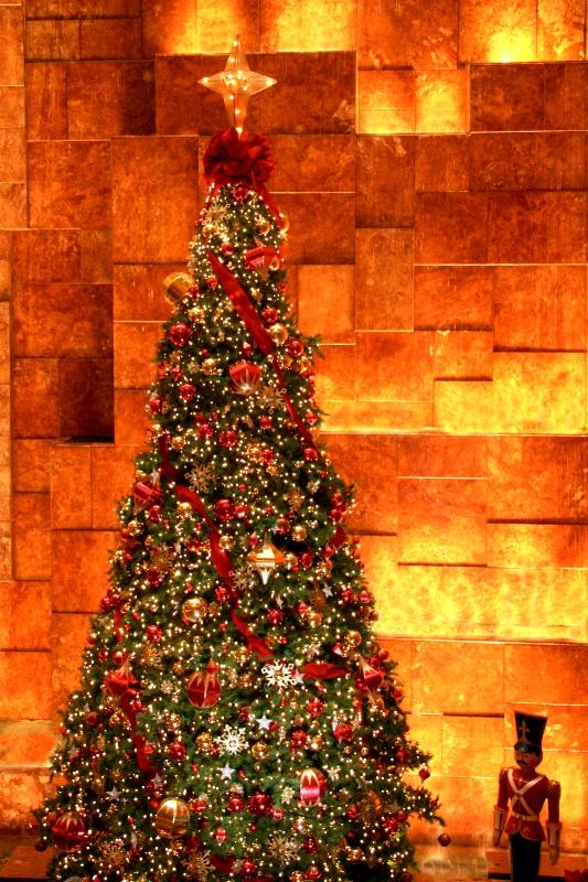 The Tree  5360