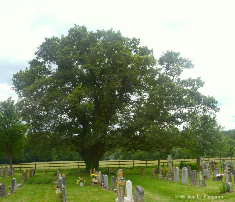 UNDER AN OAK TREE TWICE STRUCK BY LIGHTENING