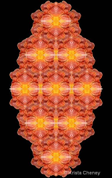 Marigold in ice—kaleidoscopic