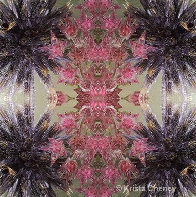 Sedum and globe thistle in ice—kaleidoscopic