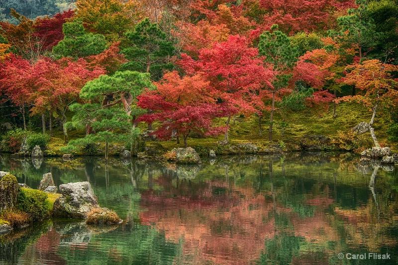 Many Shades of Autumn