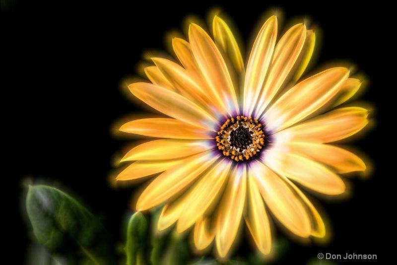 Artistic Mont Co Flower 032