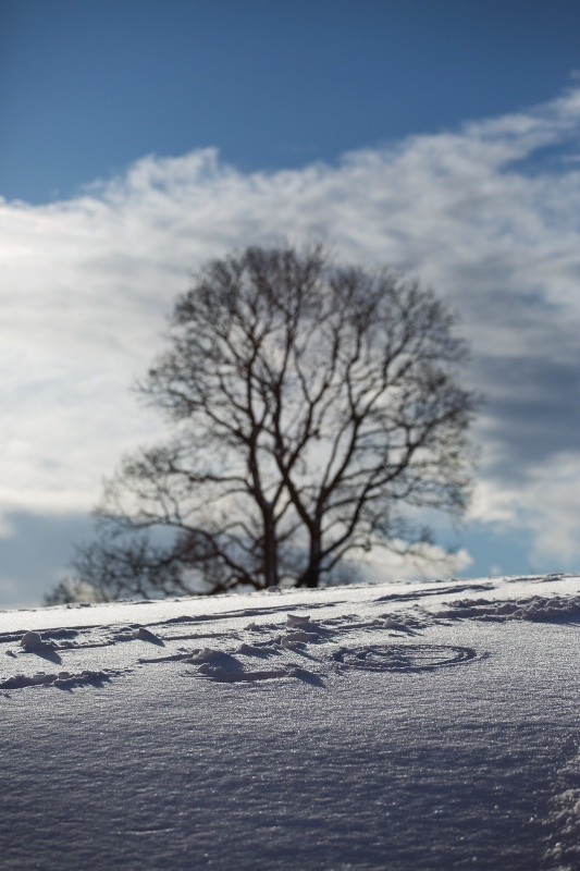 Snow Language