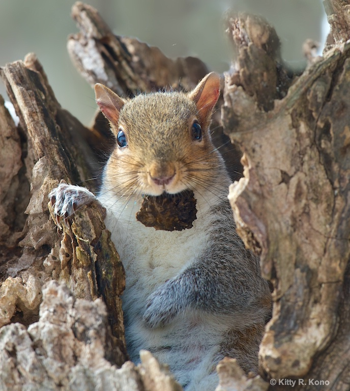Squirrel with Chip