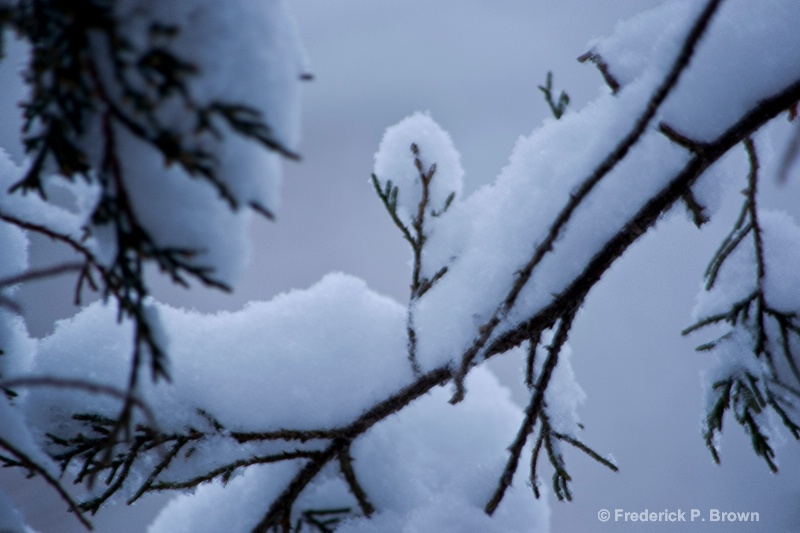 Snow on Branches!