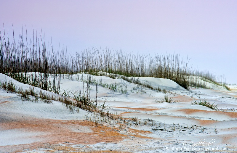 Anastasia Beach Dunes No. 2