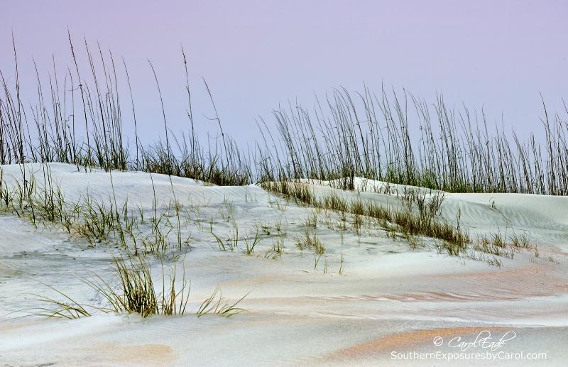 Anastasia Beach Dunes