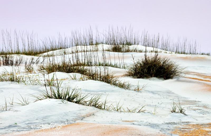 Anastasia Beach Dunes No. 3