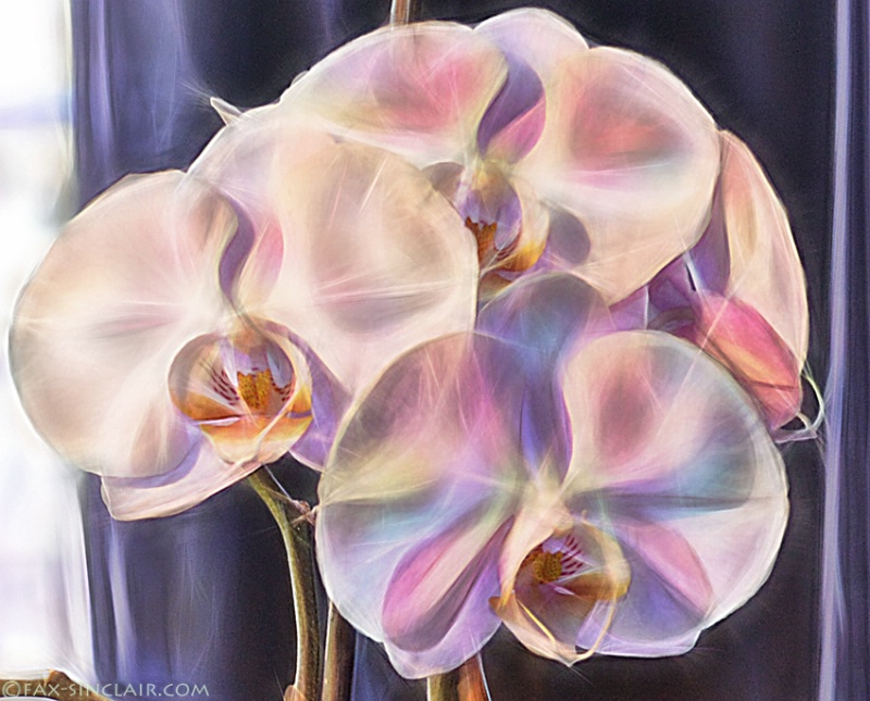 D'Elle's Orchids Close-up