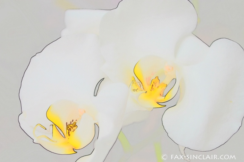 Essence of Orchids