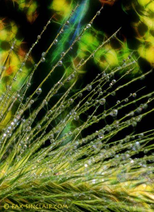 Bejeweled Weed Detail