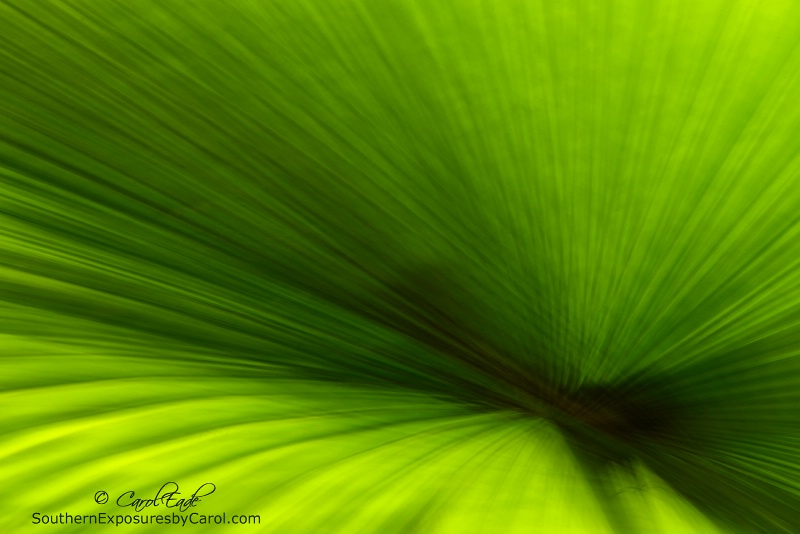 Palm Frond No. 2
