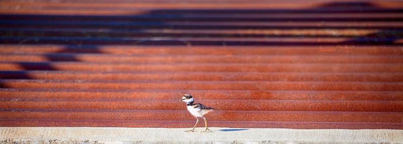Struttin' The Catwalk