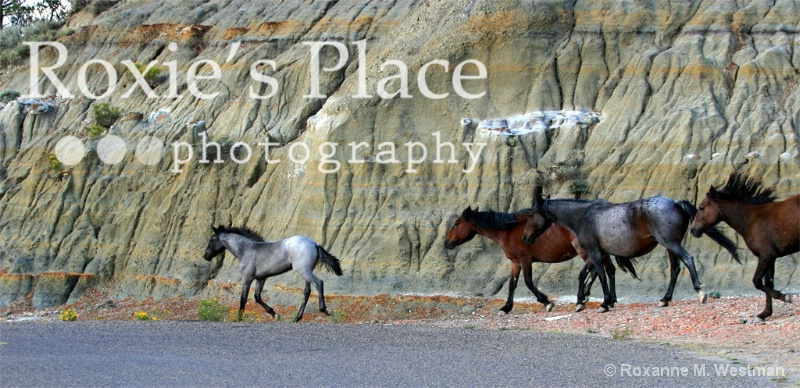 Wild horses passing by