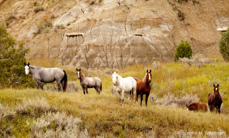 Wild Horses in Valley