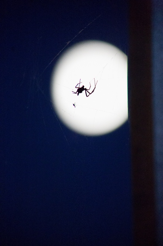 Spider on the Moon