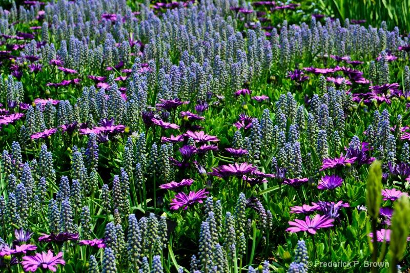 Field of Flowers-16