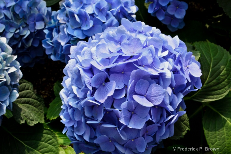 Flower-149