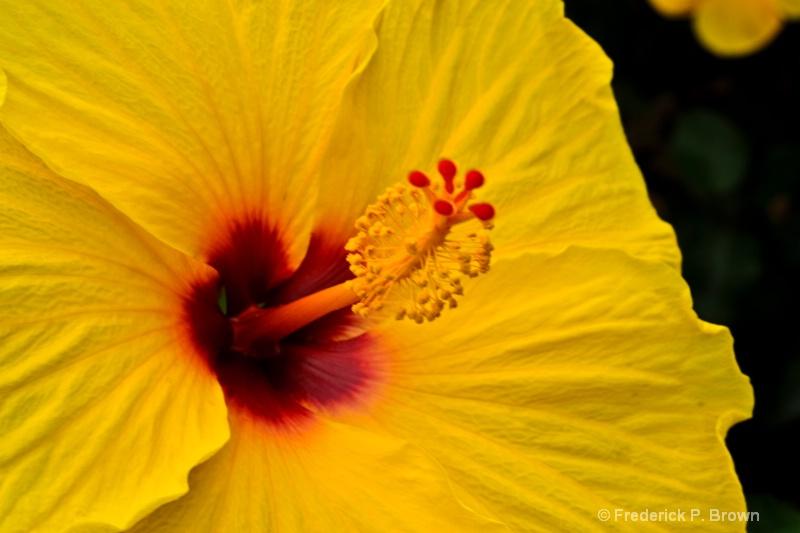 Flower-164