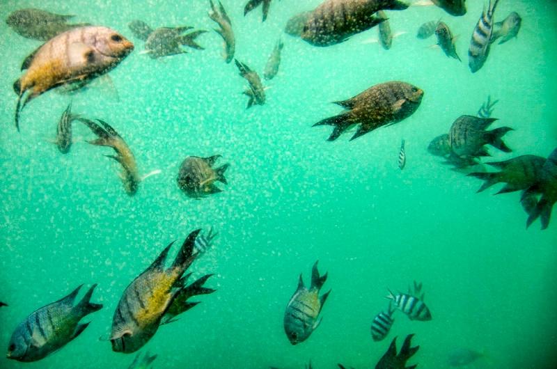 At Knuckle Reef