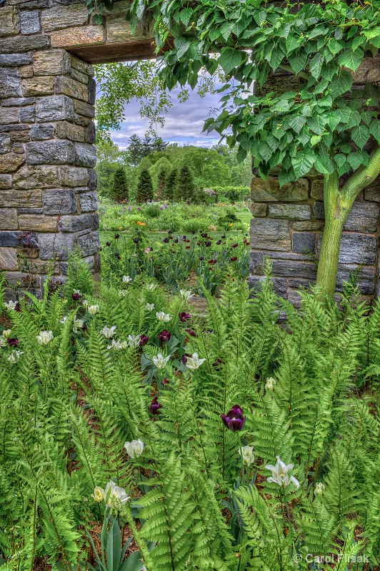 Flowers and Ferns ~ Chanticleer Gardens