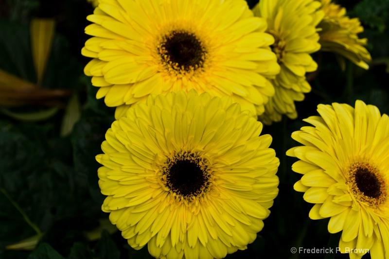 Flower-179