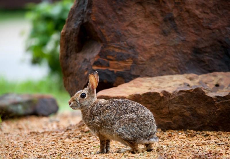 It's Bunny