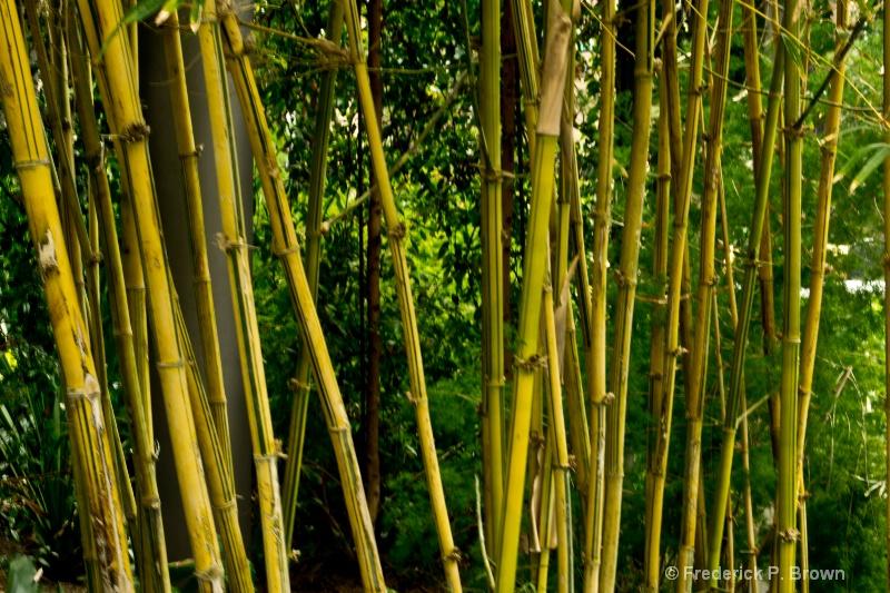 Bamboo-133