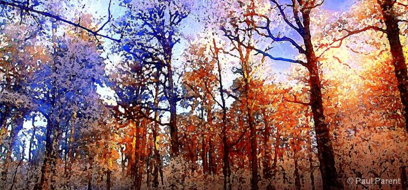 The Strange Forest