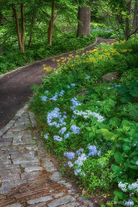 Flowers on the Curve