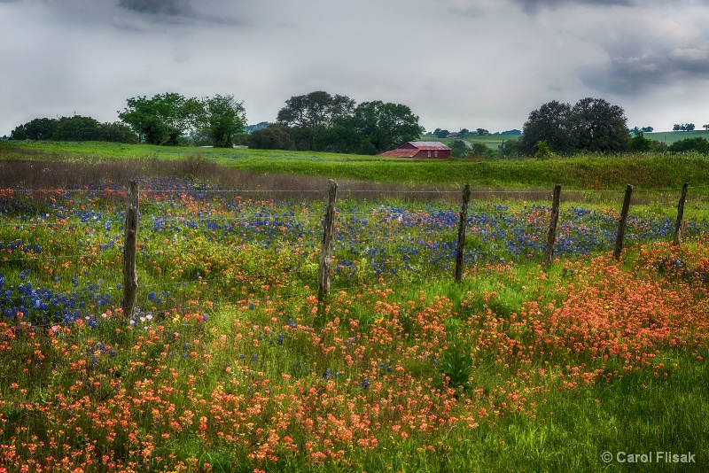 Texas Wildflowers and Cloudy Skies