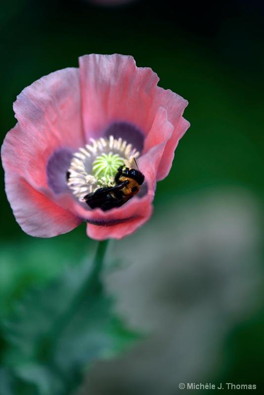 No Rain, Bees Came !!