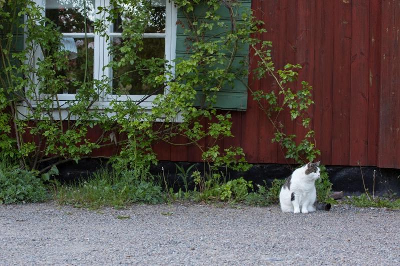 Sodermalm Cat
