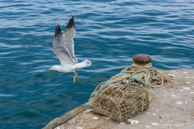 Bird Flying From Pier