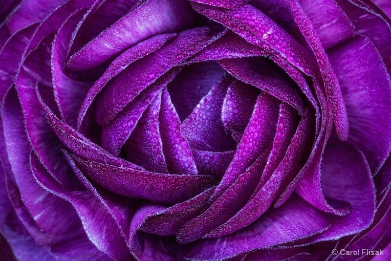 Passionately Purple